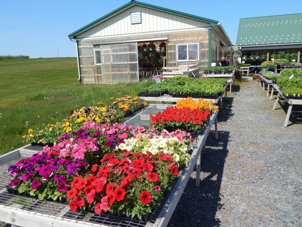 Petunias and Vegetable Plants At Tomion's
