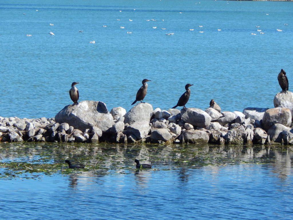 Birds At The City Pier