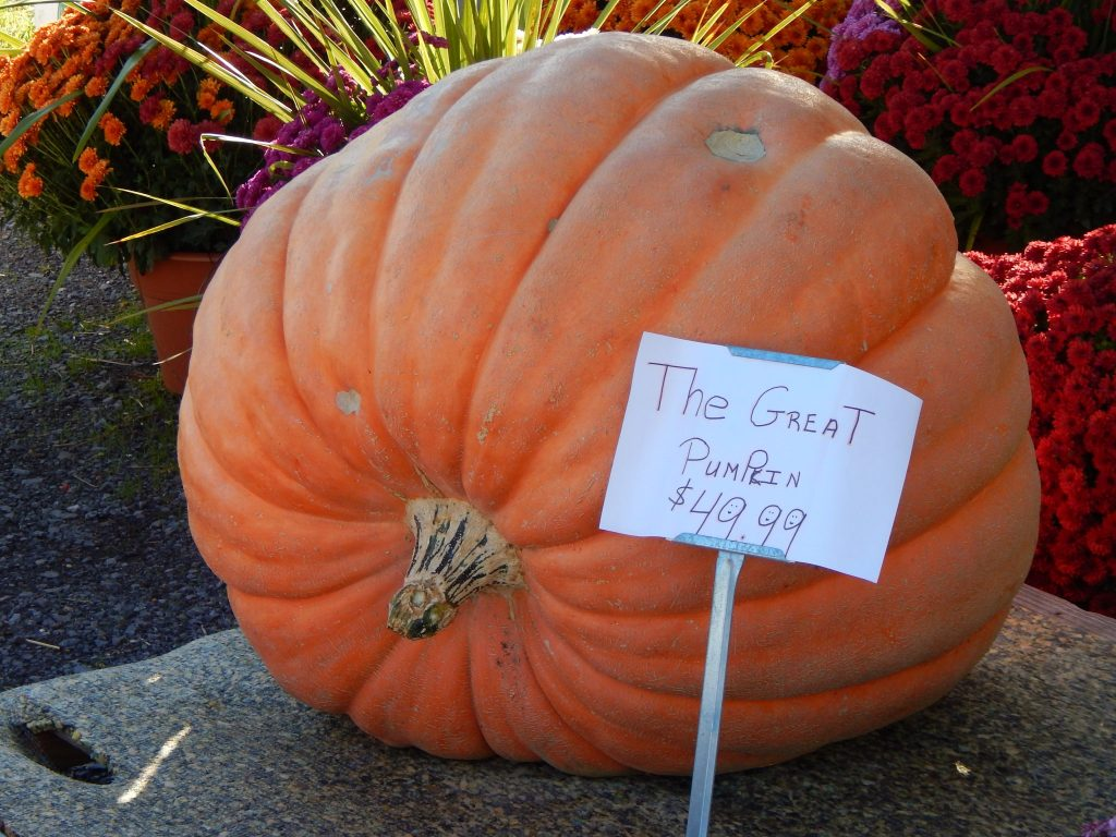 The Great Pumpkin at Tomions Farm Market