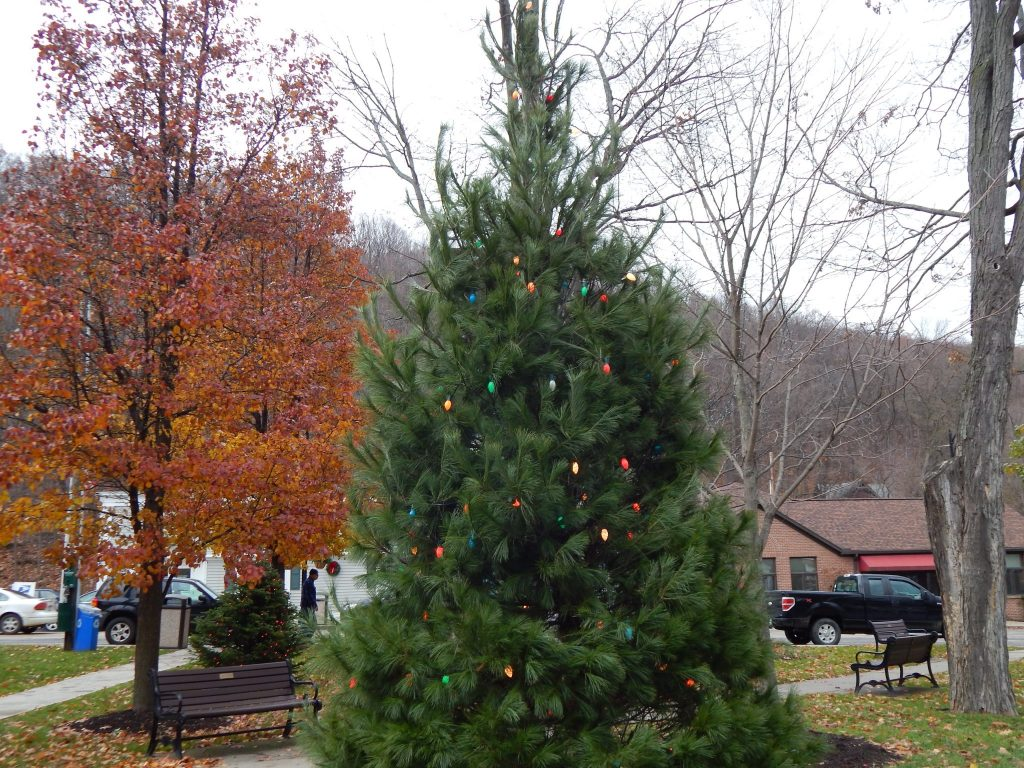 The Christmas Tree on the Village Square