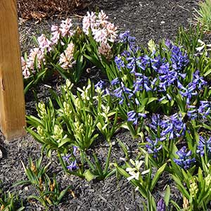 Spring Flowers at Canandaigua