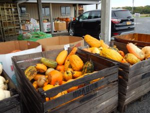 Fall's Bountiful Harvest in the Finger Lakes